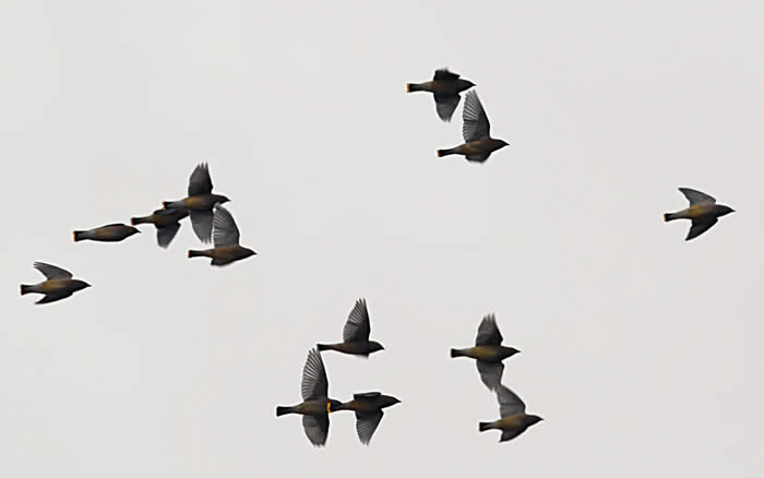 Ranarison Tsilavo, Migration